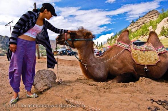 Gorkhi Terelj National Park Mongolia Camel 1
