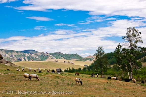 Gorkhi Terelj National Park Mongolia Sheep Landscape