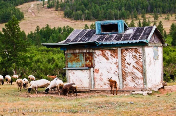 mongolia sheep old hut
