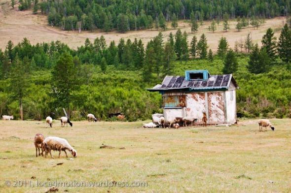 Gorkhi Terelj National Park Mongolia Sheep Old Hut Landscape