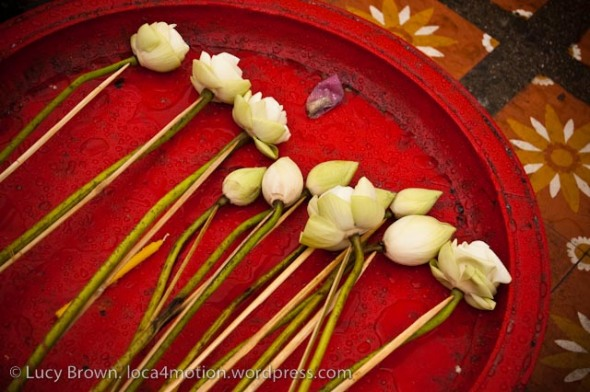 Temple offerings: lotus flowers, Chiang Mai, Thailand