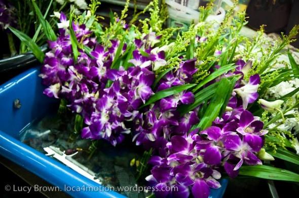 Orchids, market, Krabi, Thailand