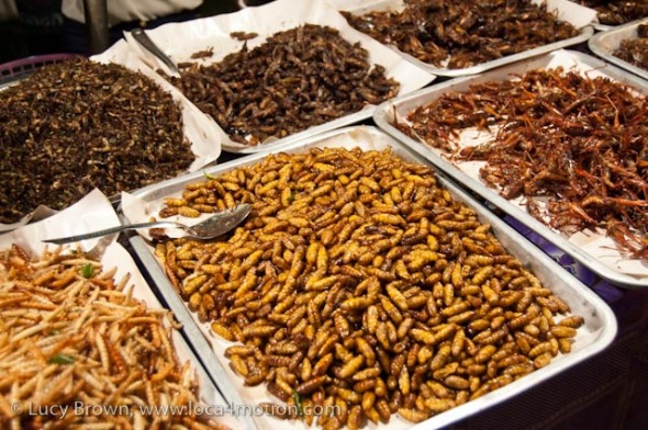 Fried array of bugs, street food, Thailand