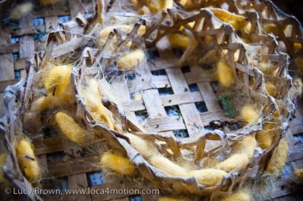 Thai silk worm cocoons, Chiang Mai, Thailand