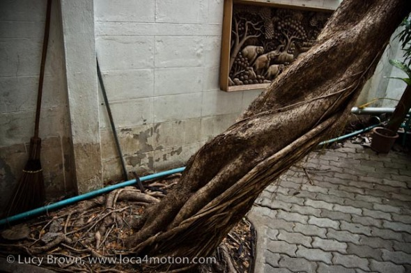 Beautiful, twisted tree trunk with wood carving scene behind, Chiang Mai, Thailand