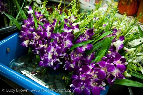 Orchids, morning market, Krabi town, Krabi, Thailand
