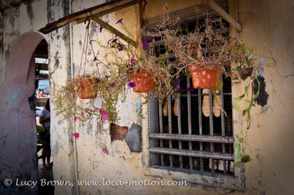 Flower Pots Hanging in Window, George Town, Penang, Malaysia