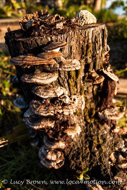 Fungi bathed in early morning light, Ko Yao Noi, Phuket, Thailand